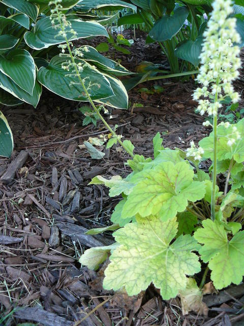 A garden bed with ornamental plants and shredded wood mulch protecting the soil.