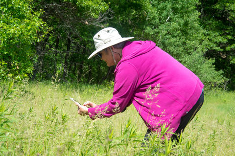Person identifying plants with a phone application in a field.