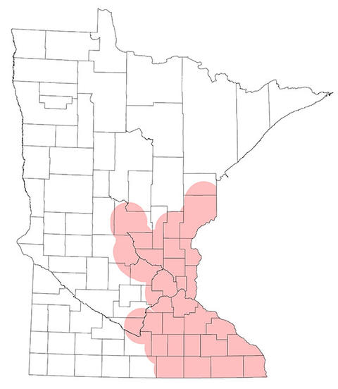 Map of confirmed occurrence of oak wilt in Minnesota