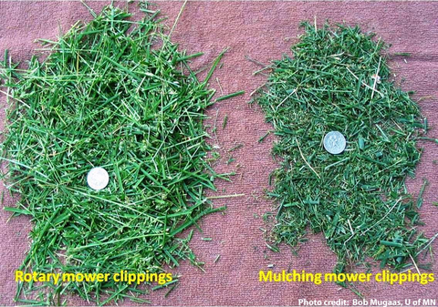 Clippings of a rotary mower side by side the smaller clippings of a mulching mower.