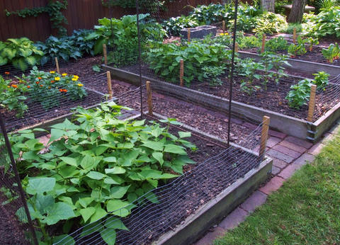 Several raised garden beds with flowers and vegetable plants in a fenced yard.