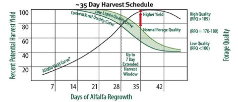 A figures showing that reducing the lignin concentration of alfalfa varieties (low lignin quality curve) will result in higher forage quality at all typical harvest times