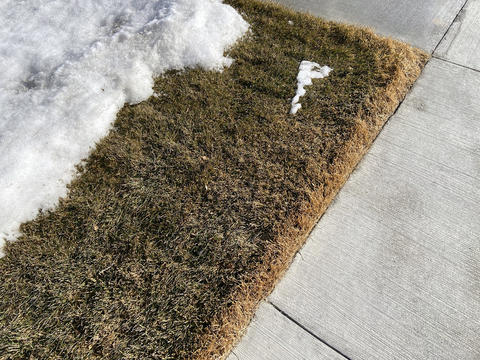 Corner of grass with brown edge near a sidewalk.