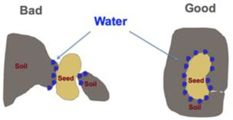 graphic of a seed with soil contacting it, and one without good soil contact, illustrating more surface area for water to access the seed