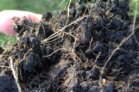 Soil with roots and leaves