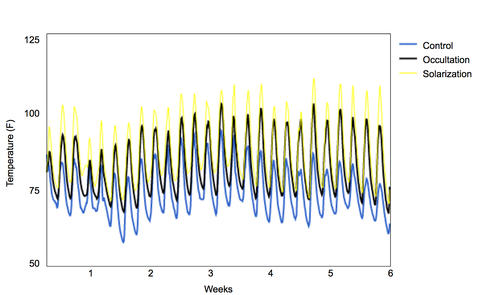 Graph showing soil temperature each week for six weeks. Yellow line represents soil temperature under the solarized treatment, black line represents soil temperature under the occultation treatment, and blue line is control. Yellow line is consistently highest, followed by black line, with the blue line consistently the lowest.