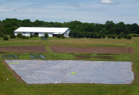 Clear plastic covering over a large section of a field with two uncovered dirt plots and a barn in the background.