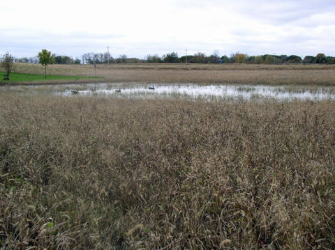 draining defined wetlands
