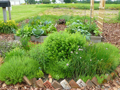 Raised bed gardens | UMN Extension