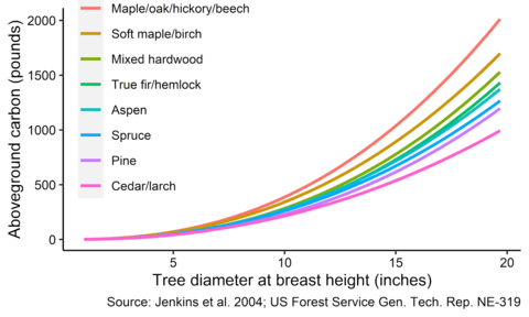 Graph showing the amount of carbon stored by different tree species. For the same diameter tree, maple, oak, hickory, and beech trees store the most carbon compared to other species.