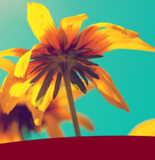 underside of yellow flower with aqua background and maroon bar underneath