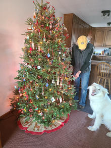 Decorated fir tree in a home with a man and a white dog nearby.