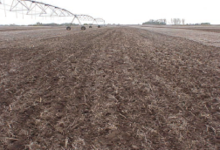 one-pass with a spring field cultivator