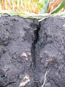 underground view of soil with a deep cracking from ground downward.