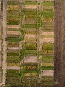 aerial view of crop research plots, with a patch work of colors