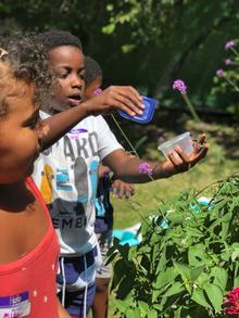 Three young children collect plants and pollinators as part of the Children' Garden in Residence program