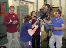people performing a dental exam on a horse in a barn.