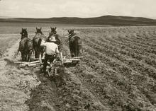 four horses pulling a plow with a man sitting on the plow.