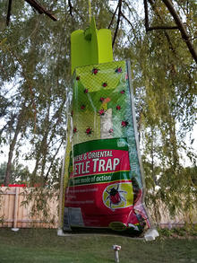 "Plastic bag with ""Japanese and oriental beetle trap"" printed on it hangs from a tree branch"