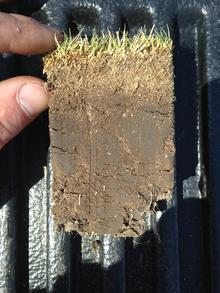 A soil core of a lawn with grass at the top, a layer of thatch and a layer of soil.