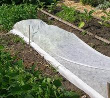 A white meshed fabric covering plants