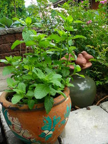 Green leafy plant in a vintage terracotta pot painted with decorations.