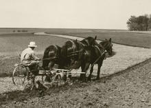 man riding on a plow pulled by three horses.