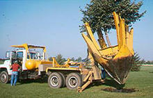 Truck with tree spade, digging tree out of ground.