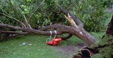 tree uprooted and lying on its side with a child's tree swing attached