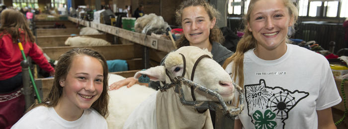 4-H girls with sheep