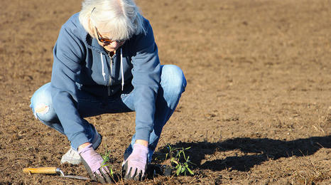 A woman crouching while she plants something in a field.