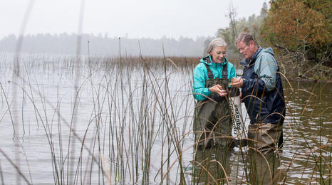 Two people looking for aquatic invasive species in lake.