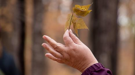 Hand holding a yellow fall leaf.
