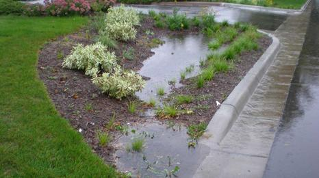 Rain garden collecting stormwater runoff.