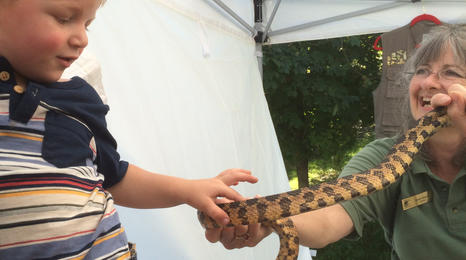 A naturalist holds a snake while a young child touches it.