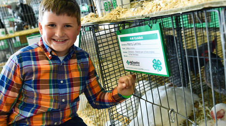Boy with poultry at the fair.