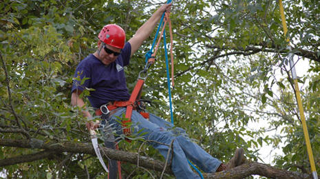 A man hangs by a harness in a tree while sawing a branch.