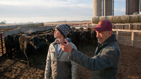 researchers in beef feedlot