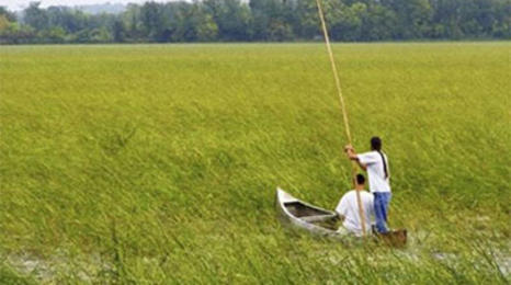 Two people canoeing in a field of wild rice.