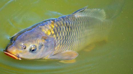 Identify invasive and non-native species | UMN Extension