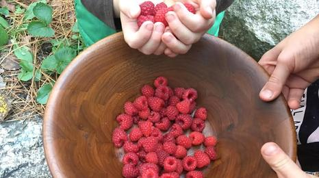 Raspberries in a bowl.
