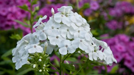 White and purple flowers.