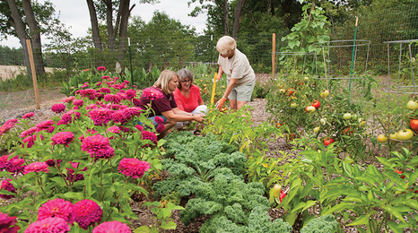 Women in a garden full of zinnias.