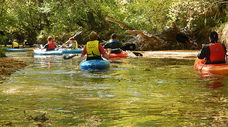 students kayaking down a river with tree covered banks.
