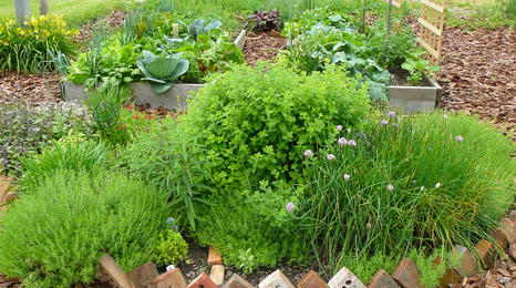 raised beds with vegetables and herbs