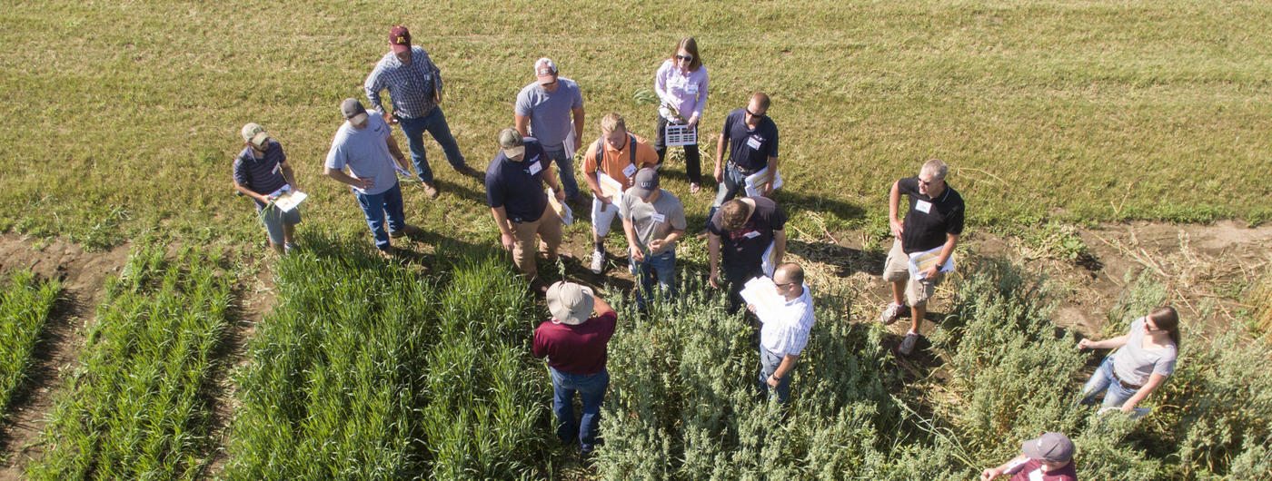 Aerial view of group in field.