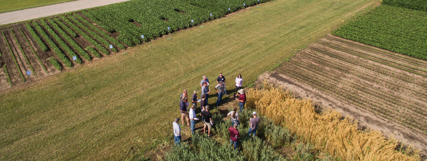 Group of people in grain field