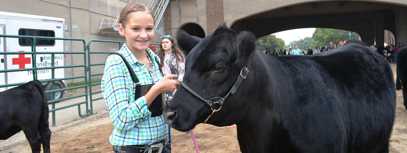 girl with a beef cow at the fair