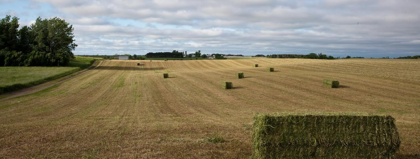 Hay field with square bales.