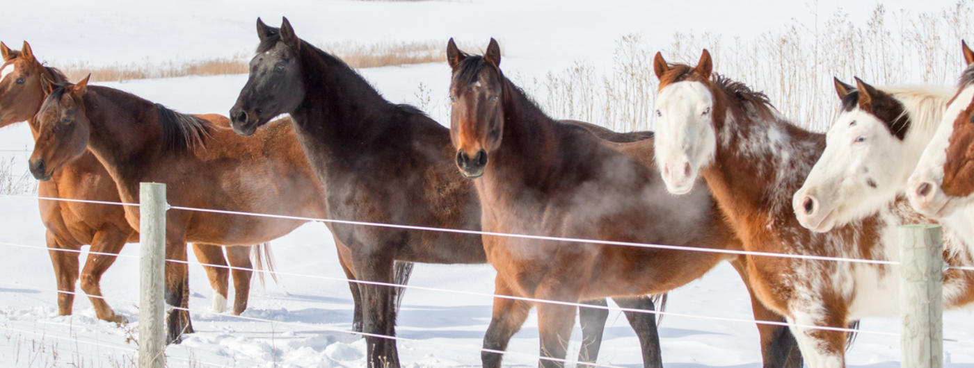 Horses along a fence in winter.